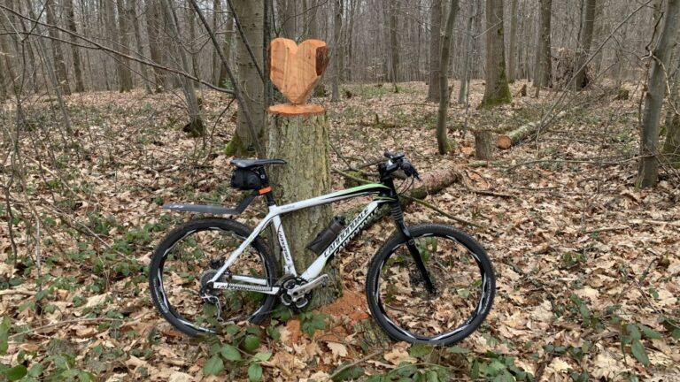 MTB im Wald